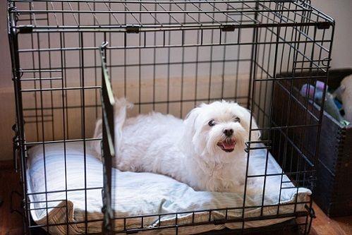 146f8b6073ba Οτι θα πρέπει υπεύθυνα να φροντίσετε για τον περιορισμό της άσκησης του  σκύλου σας ώστε να επουλωθούν οι τραυματισμένοι ιστοί του.